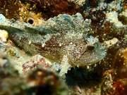 Kauai Underwater