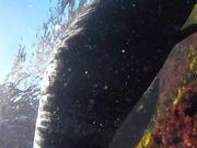Montague Sea Pups