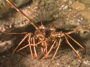 Crawfish Compilation