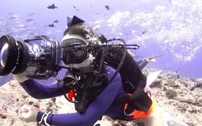 Palau X-MAS