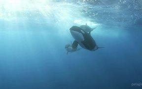 Marlin Extravaganza