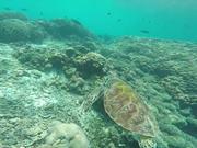 Fishfishfishyfishyfish