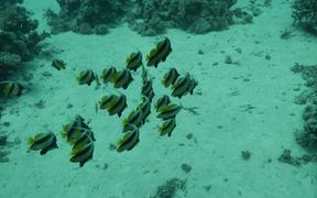 Diving the Red Sea 2