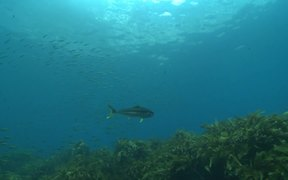 Diving in New Zealand's Marine Reserves