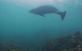 Seals of Cornwall