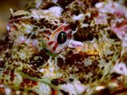 Life - An Underwater Macro World