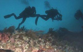 Protect California Seamounts
