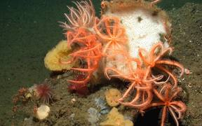 Protect California Seamounts