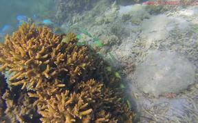 Underwater Nouvelle-Caledonie
