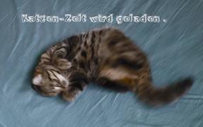 Cat-tent Video Tutorial