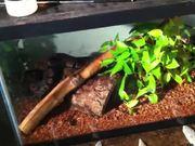 Josh's Snake Tank Tutorial