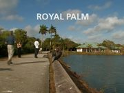 Everglades National Park: Royal Palm