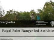 Everglades National Park: Royal Palm