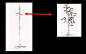 Secrets of Fruit Tree Growing Success