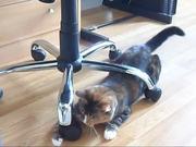 Cats VS Laser
