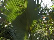 Everglades National Park: Main Park Road