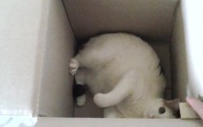 Kali in a Box
