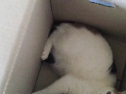 Kali in a Box