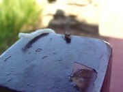 Funky Bug