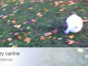Crazy Canine