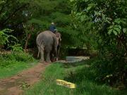 Gentle Giants of Thailand Trailer