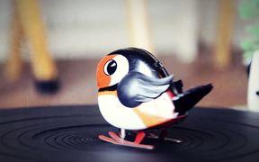 Bird pt.2