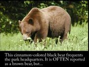 Glacier Bay National Park: Black or Brown Bear?