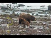 Glacier Bay National Park: Black or Brown Bear?