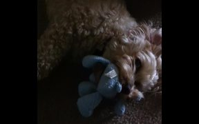 Chanel and Her Paws with Toy