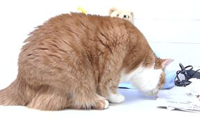 How to Get Your Cat to Eat More Slowly