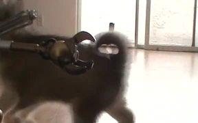 Dalek vs. Husky