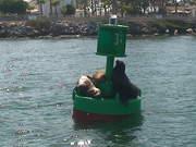 Seals having a Fun Time