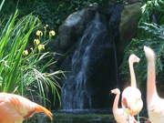 A Waterfall and Flamingos