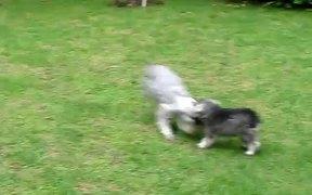 Spot and Fruna