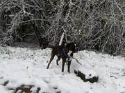 Boxer and Snow