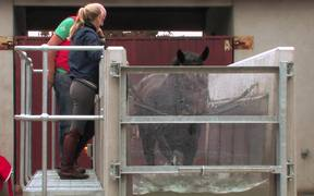 Aqua Equine Treadmill with Camilla Speirs