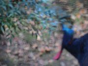 Bird on a Mission: Mr. Blue Meets a Frigatebird