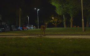 Canon Commercial: Urban Deer