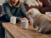 McVitie's Commercial: Christmas Animal Choir