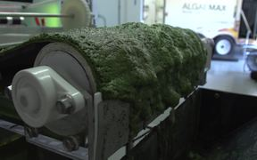 EWS Algae Harvester: How it works