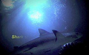 Biomimicry - Inspiration from Shark