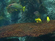 Fish Reef