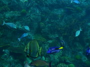 Free Fishes Reef