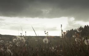 Dreams (Cinematography)