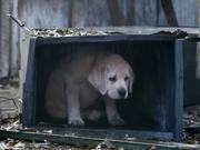 Budweiser Commercial: Lost Dog