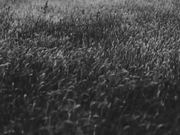 Black&White Meadow
