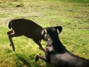 Google Commercial: Friends Furever