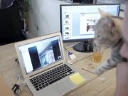 Poopy Cat Video: A Day at Poopy Cat Office