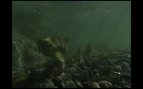 Glacier Bay National Park: Beneath The Reflections