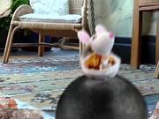 Mars Temptations Video: Cat vs. Mouse